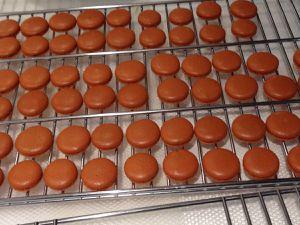 Coques macarons après cuisson