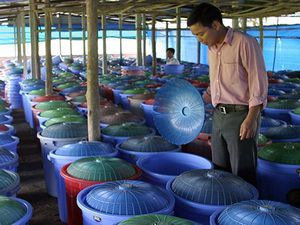 Ferme des mille vaches et élevage de grillons au Vietnam.