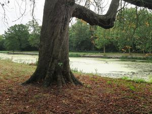 Wanstead Park &amp&#x3B; Epping Forest