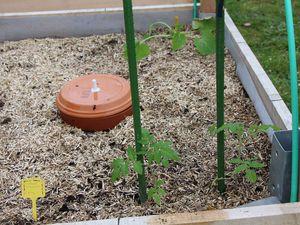 6 Mai : Tout est planté, il ne reste plus qu'à regarder pousser