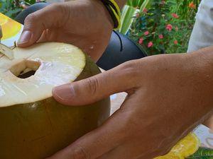 dégustation d'une coco