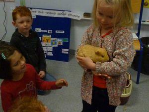 Rencontre avec Stoufy, le cochon dinde d'Aëryn. Il est venu passer une journée à l'école.