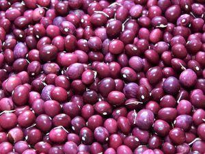 Nourrissants, variés et succulents quand ils sont bien préparés, les haricots secs sont faciles et stocker et à conserver.