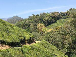 Randonnée dans les hauts-plateaux (ghats) près de Munnar