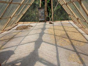 2ième étape: le séchage des grains de café, de une à trois semaines selon le climat.