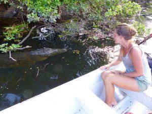 La lagune dont la mangrove a été fortement endommagée par les tempêtes tropicales