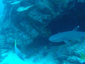 Last picture is a Hammerhead Shark