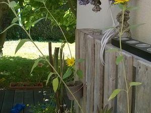Palette porte-pots de fleurs