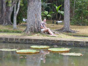 Destination île Maurice : le jardin de Pamplemousses