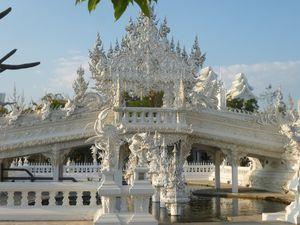 Temple albinos