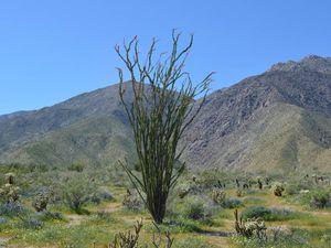 J'aime bien ce cactus/arbre (je ne sais pas vraiment ce que c'est...)