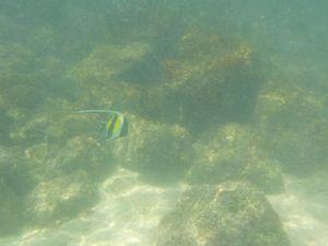 Des petits poissons : j'adore!!!