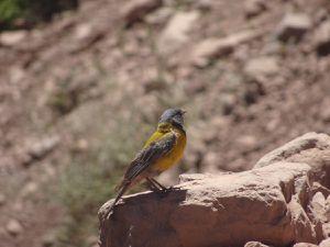 Des petits oiseaux pas bien craintifs