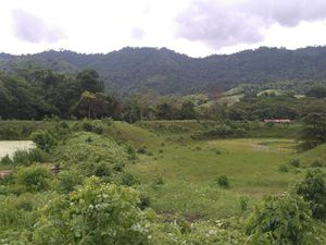 La future plantation de cacao :)