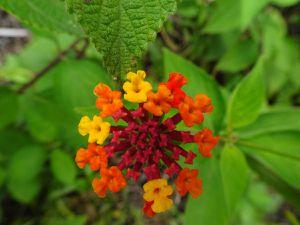 Flore en chemin