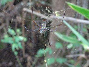 Les insectes et les araignées aussi sont présents