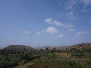 Dimanche, on a loué une voiture pour partir côté est. Quelques ribeiras sillonnent la pente nord-est du Pico, l'ancien volcan. Ce sont de véritables oasis qui éclatent dans les vallées, au creux des pentes montagneuses, à présent dénudées par la sécheresse et le vent. L'agriculture se pratique soit dans ces vallées, soit entre 500 et 1000 mètres d'altitude. En altitude sont cultivés le maïs et le haricot-grain. Le maïs sert de tuteur aux haricots. Ces cultures sont dépendantes de la saison des pluies (août-octobre, 5 pluies sur deux semaines cette année puis une pluie tardive fin octobre). Pour cette raison, l'aide internationale en riz couvre la fluctuation et les difficultés liées à la culture céréalière. Un roman, Les victimes du vent d'est, de Manuel Lopes, auteur cap-verdien, témoigne tristement de l'espoir accroché à la saison des pluies, du drame du cycle des saisons sur une agriculture fragile. Dans les ribeiras irriguées, illustrées par ces quelques photos, sont cultivés la canne à sucre, les pommes de terre, les patates douces, le manioc, la banane et les légumes. L'irrigation provient de puits, de captage de source et aujourd'hui d'un barrage récemment construit à l'appui de subventions chinoises. L'eau douce est ainsi réservée à l'agriculture. L'eau du réseau de distribution à la population est de l'eau de mer dessalée. Plus de 90 pour cent des exploitations couvrent l'auto-consommation uniquement. Aucun engrais chimiques, aucun produits phyto-sanitaires ne sont utilisés.