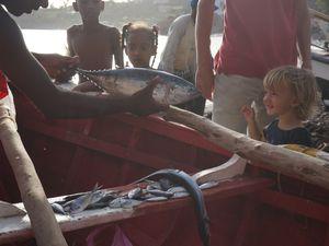 La mer ce jour là était bonne, le retour de pêche magnifique. Temps fort du village, tout le monde se rassemble, les plus petits poissons sont distribués aux enfants, je vous laisse admirer la taille des plus gros ! En seconde image, un espadon voilier, le poisson le plus rapide : 110 km/h ! En troisième image, la principale source de protéines au Cap-Vert : le thon.