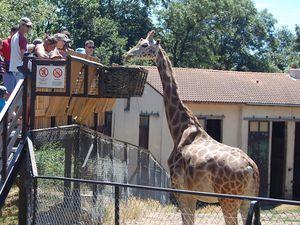 Le Safari de Peaugres, une belle visite pas bête!   {+Concours!}