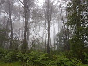The camino under rain/ le chemin sous la pluie