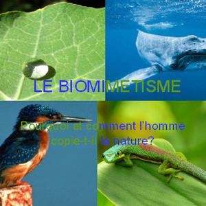 TPE Biomimetisme