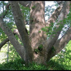 le temps d'un arbre...