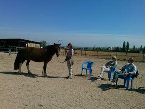 Osez découvrir le coaching facilité par le cheval