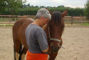 Le cheval au service du coach