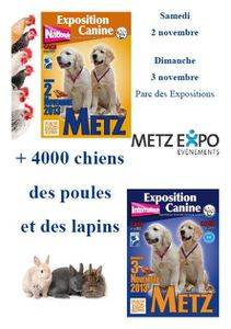 Metz Expo : Exposition Canine Internationale les 2 au 3 novembre 2013