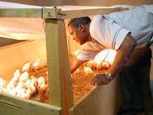 Les aviculteurs sont dans l'inquiétude