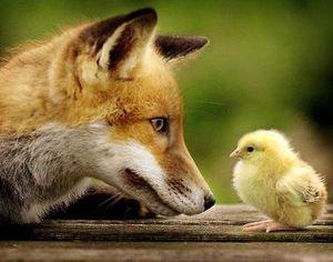 Métacognition de l'animal