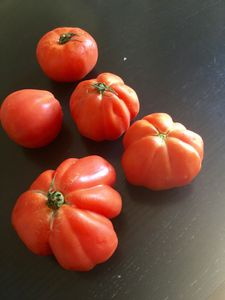 Sauce tomate, recette au thermomix