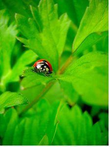 Comprendre: la biodiversité menacée