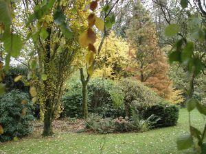 Le jardin (couleurs d'automne)