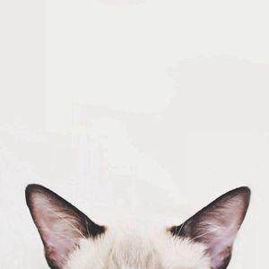 A l'oreille !