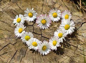 Mon amour, mon coeur, citation de Heinrich Heine