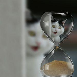 Prendre son temps, citation de Mikhaïl Boulgakov