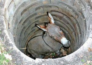 L'âne au fond du puits, à méditer !