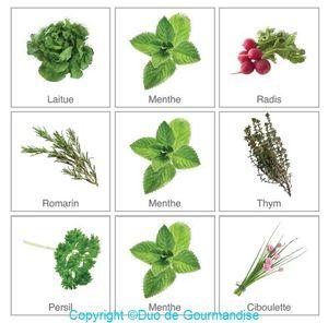 Choix des légumes pour mon potager