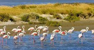 Des naturistes et des oiseaux ou un site SEVESO...?