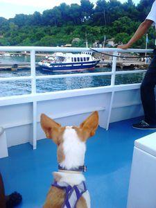 Marieke &amp&#x3B; Akita sont sur un bateau...
