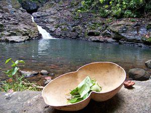 Découverte de plantes sauvages en Guadeloupe