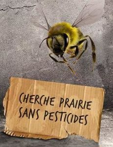 Disparitions des abeilles : tensions entre Obama et Poutine