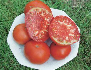 Des tomates hors catalogue (par Olivier de Robert)
