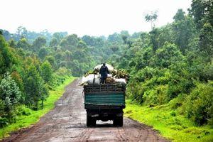 Demokratia respubliko kongo : la arbaro prirabita de internaciaj kompanioj