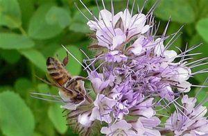Biodiversité en Franche Comté- Sud Alsace
