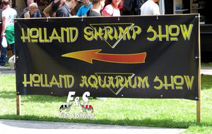 De retour du Holland Shrimp Show 2013