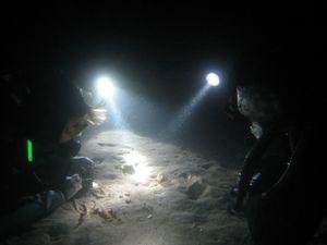 Plongée de Nuit