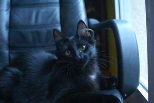 C'est un petit chat noir