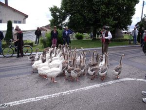Geese in Dombasle-sur-Meurthe